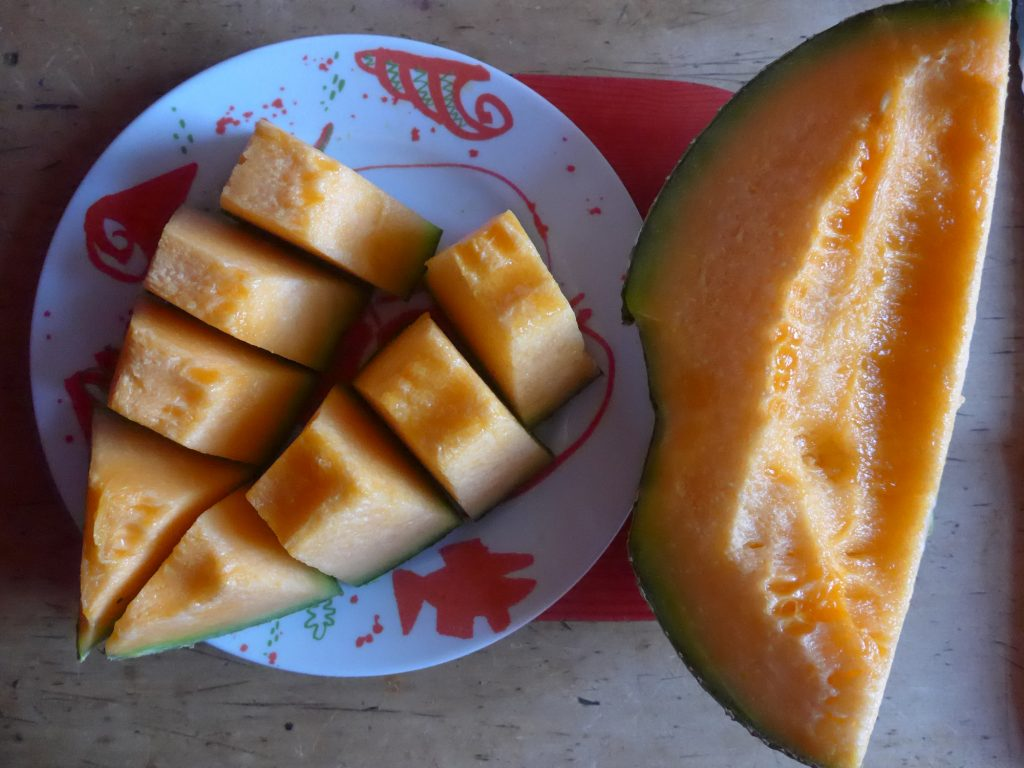Melonenkostprobe (Foto Jürgen Müller-Lütken)